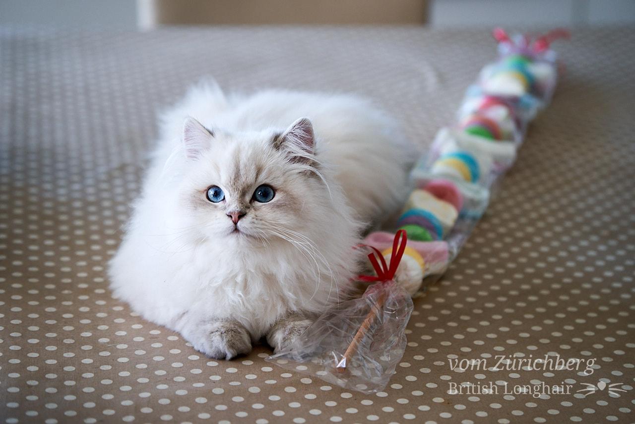 Marin candy cat 1