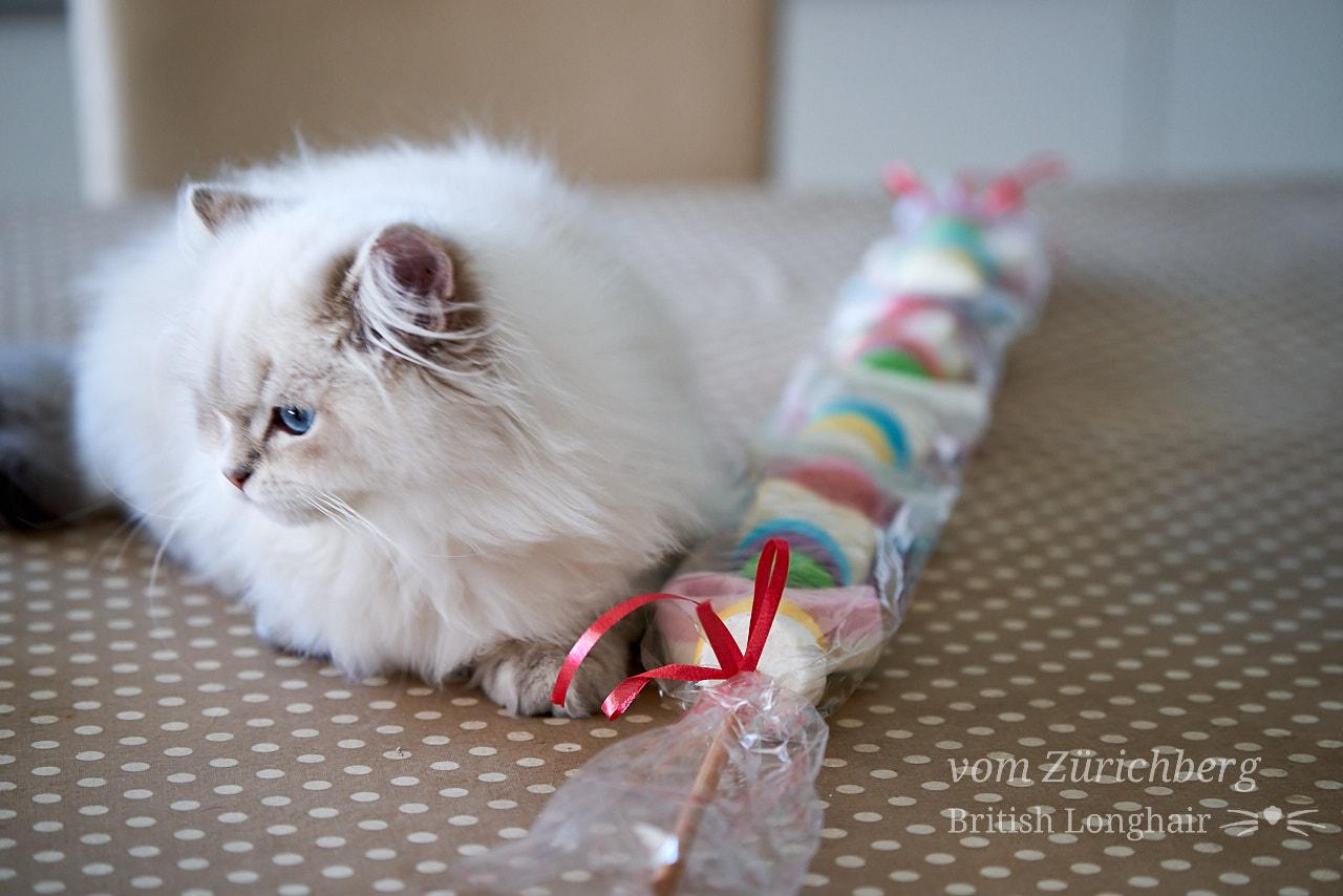 Marin candy cat 3