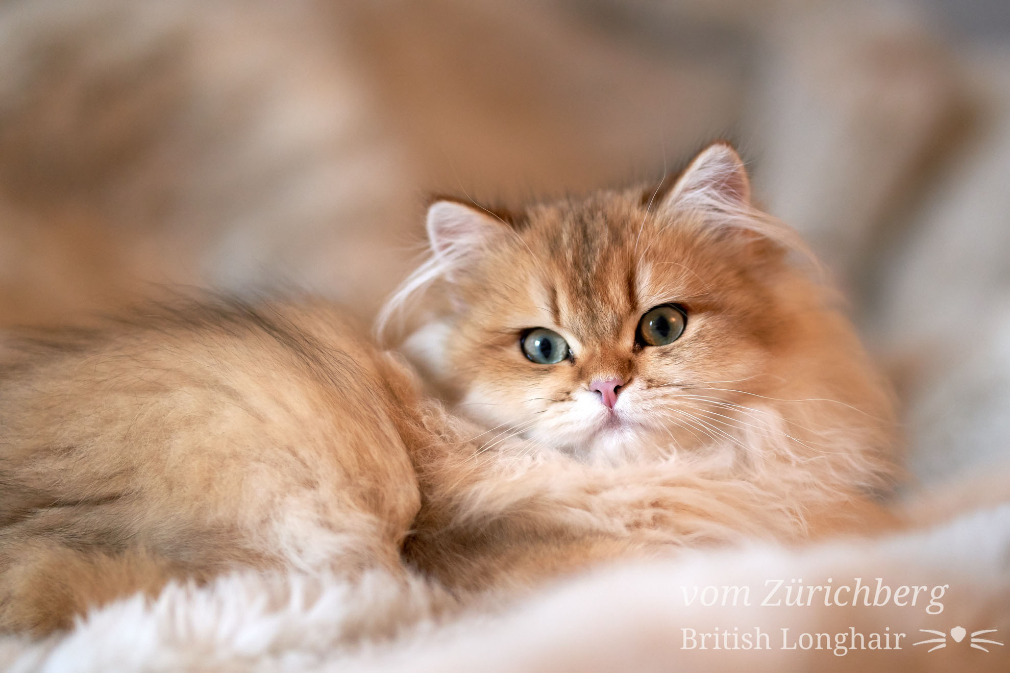 British petits chats_2018-10-041